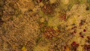 Łąki w dolinie Kamiennej